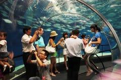 Shanghai Ocean Aquarium. People watching marine life in Shanghai Ocean Aquarium, China stock photo
