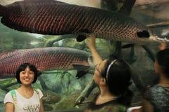 Shanghai Ocean Aquarium. People watching marine life in Shanghai Ocean Aquarium, China stock photography