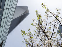 Shanghai skyscraper with cherry blossoms Stock Photo