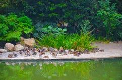 Shanghai zoo. Filmed in Bird Island of shanghai zoo Royalty Free Stock Photos