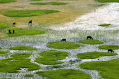 shangri τοπίου αγροκτημάτων Λα στοκ φωτογραφία
