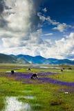 Shangri-la hermoso Foto de archivo libre de regalías
