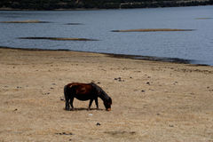 Shangri-la horse Stock Images