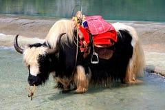 Shangri-La, Lijiang, Yunnan, China Foto de archivo libre de regalías