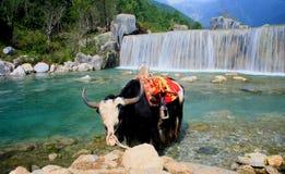 Shangri-La, Lijiang, Yunnan, China Imagens de Stock