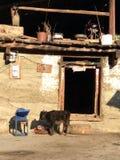 Shangrila, Китай Стоковые Фотографии RF