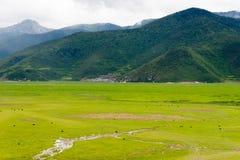 SHANGRILA, CHINA - 31 de julho de 2014: Lago Napa uma paisagem famosa dentro Fotos de Stock