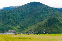 SHANGRILA, CHINA - 31 de julio de 2014: Lago Napa un paisaje famoso adentro Imagen de archivo