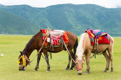 SHANGRILA, CHINE - 31 juillet 2014 : Chevaux au lac Napa une La célèbre Image libre de droits
