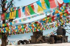 SHANGRILA KINA - MARS 13 2015: Bönflagga på den Baiji templet En gitarr för F Royaltyfri Bild