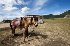 Shangrila, Yunnan, China en de plaats dichtbij Stock Foto's