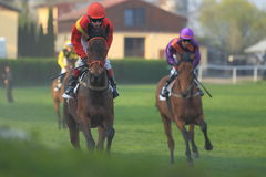 Shannyn nella corsa di cavalli a Praga immagini stock libere da diritti