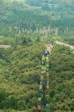 Shaolin klosterskog av pagoden Arkivfoto