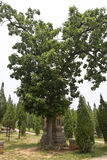 Shaolin temple tallinn Stock Image