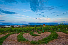 Shape. Semi circular shape grass in a Vineyard Stock Photography