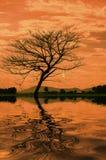 Shape av ett ensamt träd med reflexion på solnedgång Royaltyfri Foto