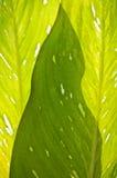 Shape of Leaf Sub Shadow. Shape of Green Leaf Sub Shadow Effect Royalty Free Stock Photography