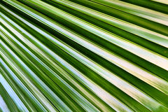 Shape of palm leaf texture. In tropical zone Royalty Free Stock Photos