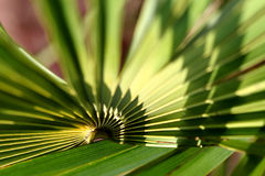 Shape of palm leaves. Shape of green palm leaves royalty free stock image