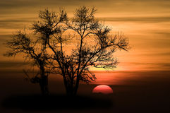 Shape of Silhouette Tree Royalty Free Stock Photography
