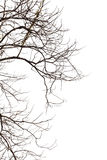 Shape of Silhouette twig on white Royalty Free Stock Photography