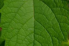 The shape and texture of tropical green leaves stock images