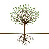 Shape of Tree and Roots. Vector Illustration. Royalty Free Stock Image