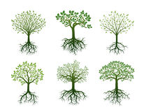 Shape of Trees, Roots and Leafs. Vector Illustration. Royalty Free Stock Photos