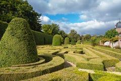 Shaped boxwood bushes Royalty Free Stock Photo