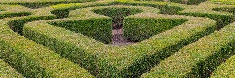 Shaped boxwood bushes Royalty Free Stock Image