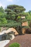 Shaped sörjer trädet i trädgården Royaltyfri Bild