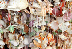 Shaped shell curtain hanging background Royalty Free Stock Photos