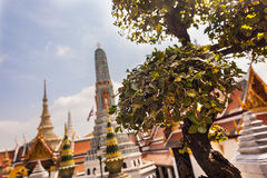 Shaped tree in wat phra kaew Royalty Free Stock Photos