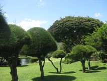 Shaped trees in a beautiful garden on the island of Kauai, Hawaii royalty free stock photos