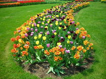 Shaped Tulip Bed. A shaped bed of tulips at Hershey Gardens in early May Royalty Free Stock Photo