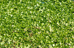 Shapes of river plants Stock Photo