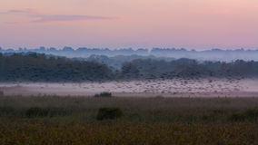 Shapwick Heath at dusk, with starling murmuration Stock Image