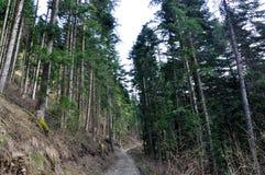 Shar mountain fir forest Stock Photos