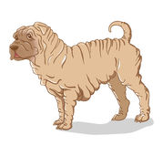 Shar Pei cream Royalty Free Stock Images