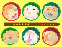 Shar Pei dogs. Group portraits of children and adults shar-pei dogs.Vector  illustration. A good gift for lovers of the breed shar-pei Royalty Free Stock Photos
