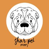 Shar pei head isolated on white background. Vector illustration, element for design, cards, banners Vector Illustration