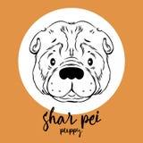 Shar-pei Kopf lokalisiert auf weißem Hintergrund Lizenzfreie Stockfotos