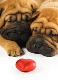 Shar pei puppies in love stock photo