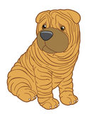 Shar pei puppy. Vector Isolated Shar pei puppy Stock Illustration