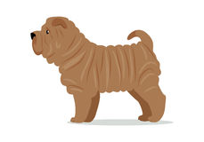 Shar Pei in Stand on White Background Royalty Free Stock Photos