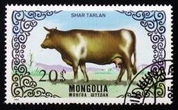 Shar Tarlan,系列致力了于牛,大约1985年 库存图片