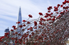 The shard of London. View from Tower of London full of red ceramic flowers for the 100 years anniversary of World War II Royalty Free Stock Photography