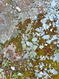 Shards of broken glass on the ground. Shards of broken glass on the moss ground stock photos