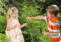 Share. Young caucasian boy sharing wildflowers with a cute little girl in nature Stock Image
