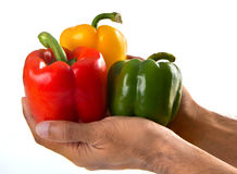 Share lend vividness. Three color peppers on the hands Stock Image